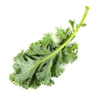 Świeży organicznie zielony jarmuż opuszcza odosobnionego nadmiernego białego tło