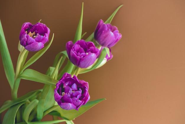 Świeży piękny różowy purpurowy tulipanowy bukiet.