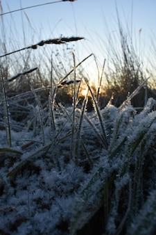 Świeży śnieg na trawie i świt