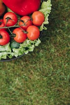 Świeży soczysty pomidor sałaty ogórek w wiadrze na zielonej lato trawy odgórnym widoku