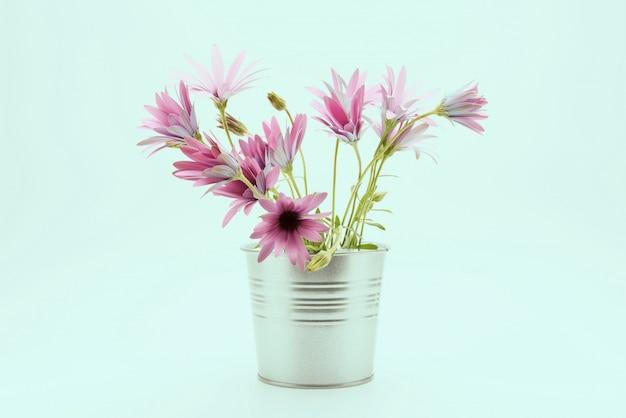Świeży stokrotka kwiat na białym tle.