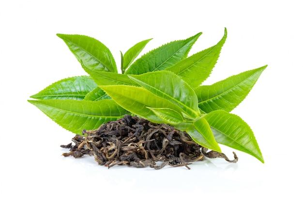 Świeży zielona herbata liść i suszy na bielu