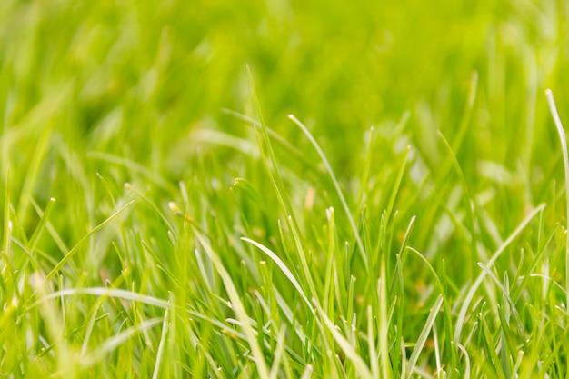 Świeży zielonej trawy makro- tło
