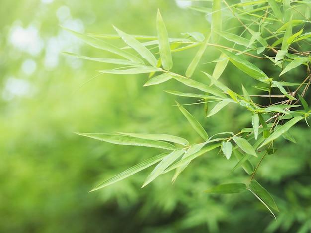 Świeży zielony bambus opuszcza przy tropikalnym lasem tropikalnym