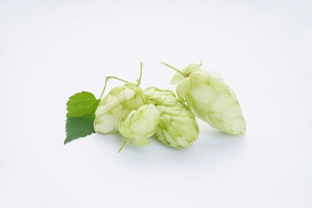 Świeży zielony chmiel