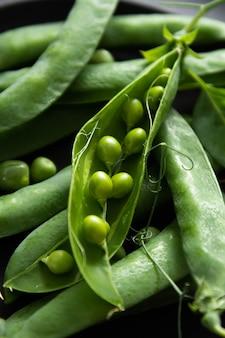 Świeży zielony groszek, rosnący groszek, koncepcja ogrodnicza