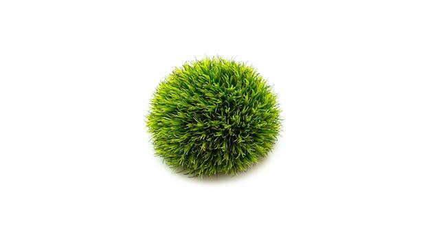 Świeży zielony kwiat goździka. widok z góry.