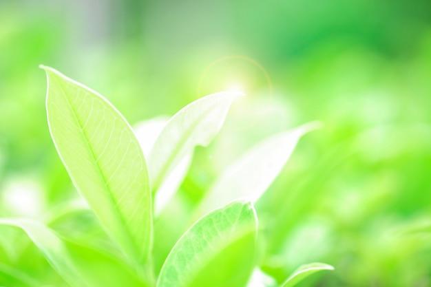 Świeży zielony liść i prześwietlenie światła słonecznego i filtra pochodni na zielonym tle rozmazane tło