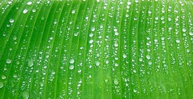 Świeży zielony liść tło