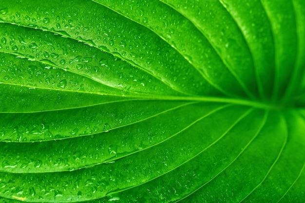 Świeży zielony liść z kroplami