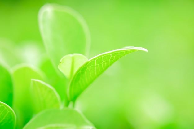 Świeży zielony liść zbliżenie