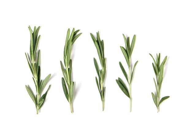 Świeży zielony rozmaryn na białym tle.