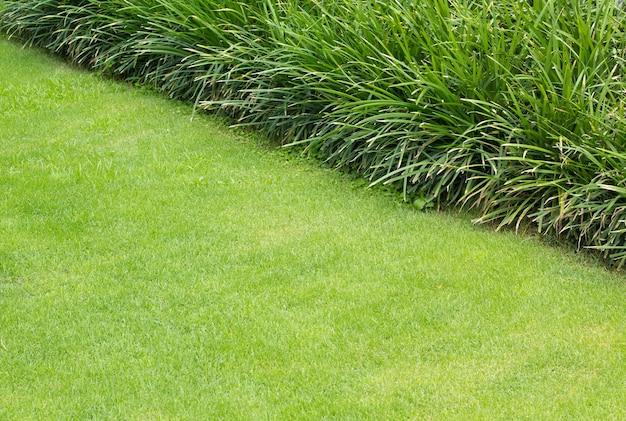 Świeży zielony trawnik lub pole trawy