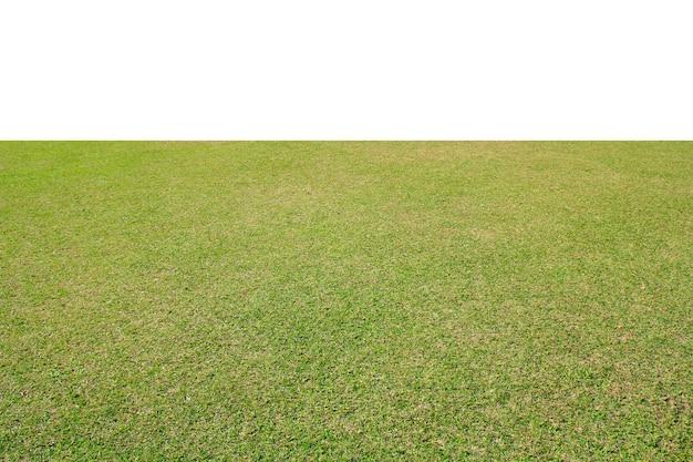 Świeży zielony trawnik na białym tle