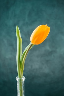 Świeży żółty tulipan w wąskiej wazonie