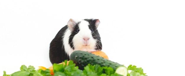 Świnka morska ze świeżymi warzywami