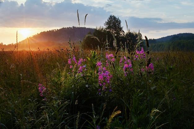Świt na polu wcześnie rano. miękkie światło słoneczne. latem kwitną dzikie kwiaty, pole porośnięte jest trawą. obszar wiejski