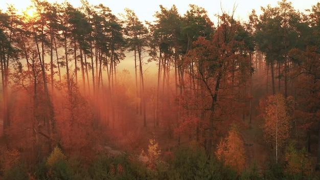 Świt nad pięknym lasem z wysokimi drzewami