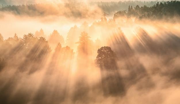 Świt w mglistym lesie, promienie słoneczne przebijają się przez mgłę i drzewa.