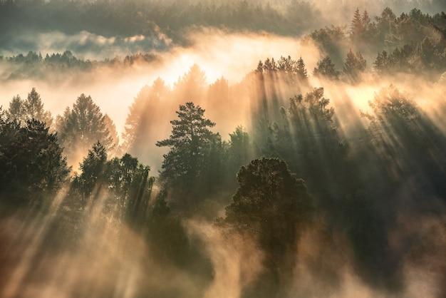 Świt w mglistym lesie, promienie słoneczne przebijają się przez mgłę i drzewa