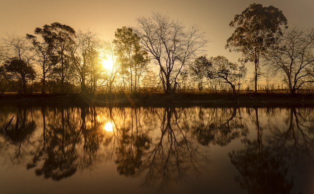 Sylwetka bezlistnych drzew w pobliżu wody ze słońcem świecącym przez gałęzie
