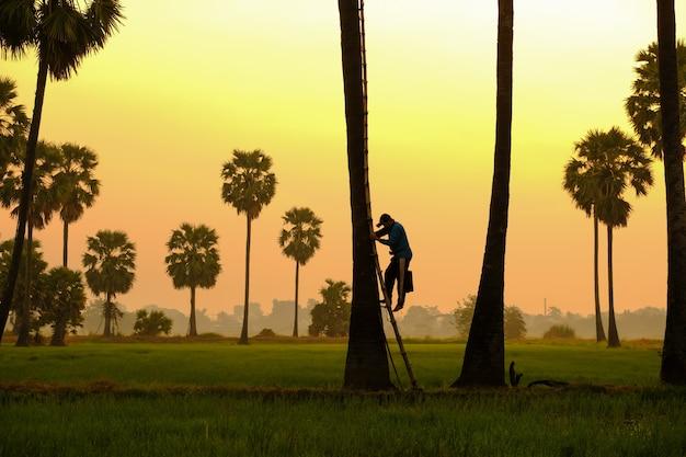 Sylwetka cukrowy drzewko palmowe w wschodzie słońca lub zmierzchu z kolorowym niebem