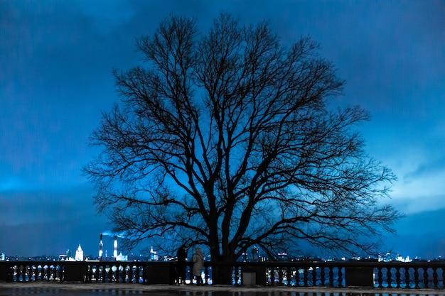 Sylwetka czarnego drzewa z opadłych liści na tle błękitnego nieba.