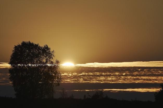 Sylwetka drzew na plaży z pięknym widokiem na zachód słońca