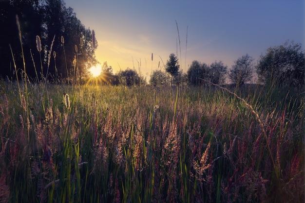 Sylwetka drzew na polu trawy ze świecącym słońcem w tle