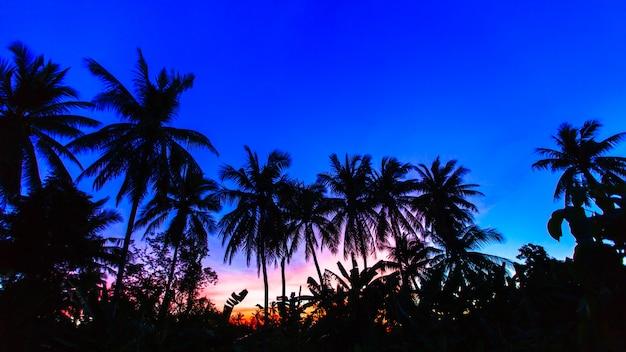 Sylwetka drzewa kokosowego na tle nieba zmierzch