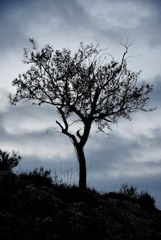 Sylwetka drzewa migdałowego w pochmurne niebo