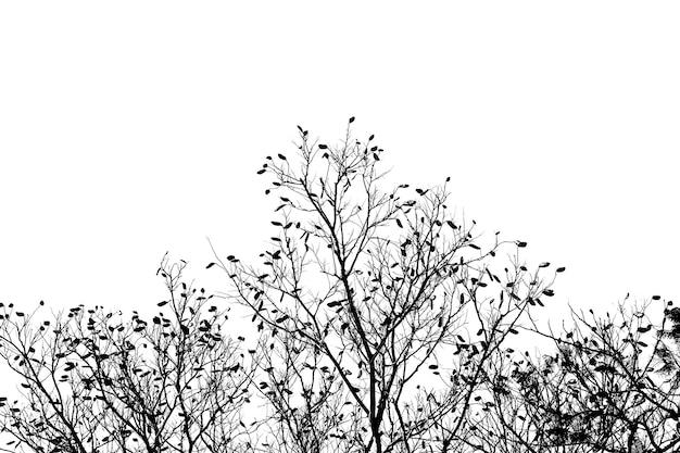 Sylwetka drzewa na białym tle