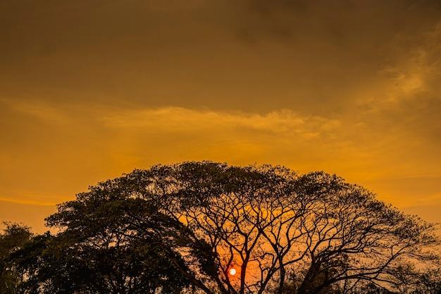 Sylwetka drzewa o zachodzie słońca.