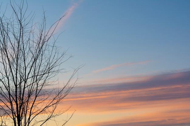 Sylwetka Drzewa Rozgałęzia Się Na Pierwszym Planie Z Pięknym Wcześnie Rano Chmury Na Niebie Premium Zdjęcia