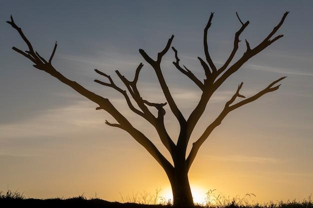 Sylwetka drzewa z suchymi gałęziami o zachodzie słońca.