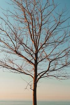 Sylwetka gałęzi drzew bez liści na niebieskim tle nieba.