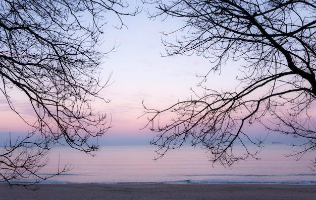 Sylwetka gałęzi drzew na tle nieba i morza