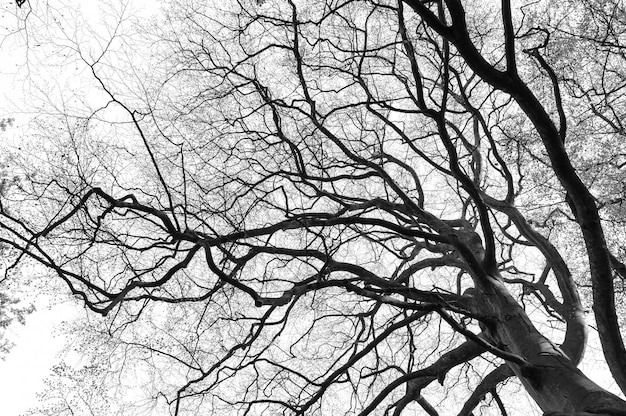 Sylwetka gałęzi drzewa