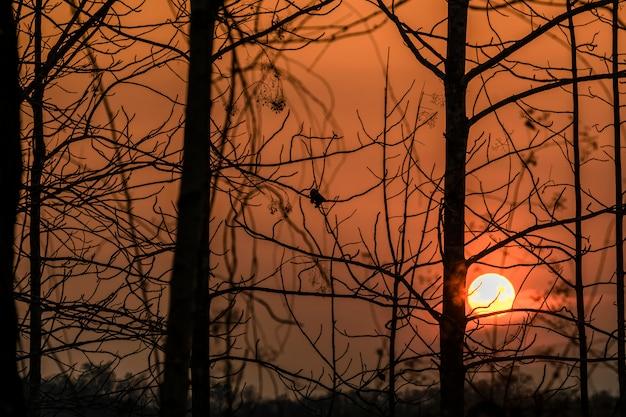 Sylwetka gałęzi o zachodzie słońca