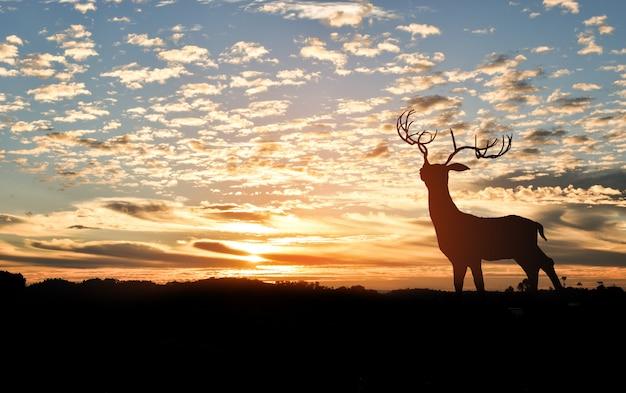 Sylwetka jelenia na szczycie góry o zachodzie słońca