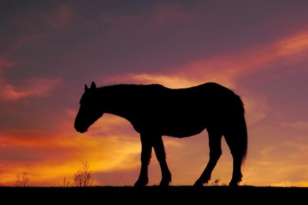 Sylwetka konia i zachód słońca na łące