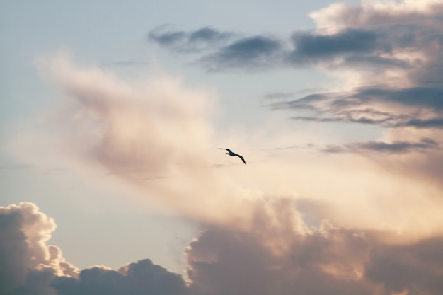 Sylwetka latającego ptaka z pochmurnego nieba