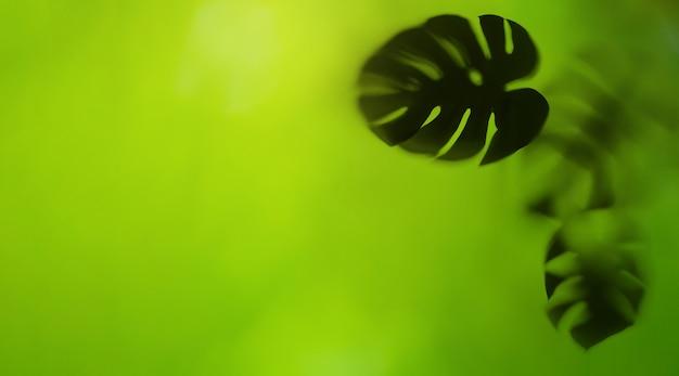 Sylwetka liść monstera na zielonym tle