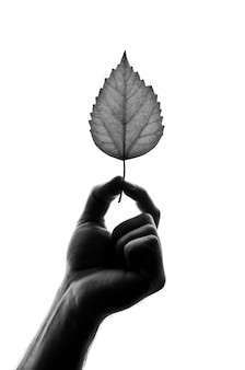 Sylwetka liścia w ręku. na białym tle