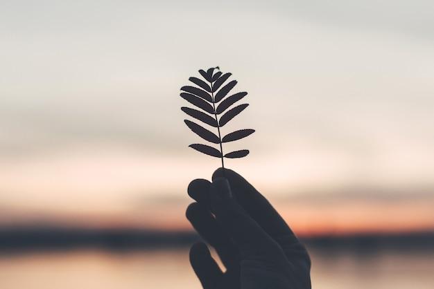 Sylwetka liścia w ręku o zachodzie słońca