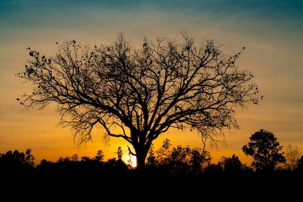 Sylwetka martwe drzewa na piękny zachód słońca lub wschód słońca na złotym niebie