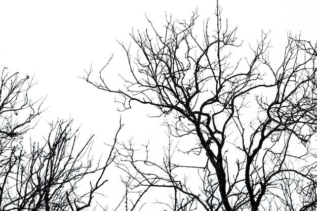 Sylwetka martwe drzewo na białym tle nieba dla spokojnej śmierci. rozpacz i beznadziejna koncepcja. smutny z natury. unikalny wzór martwej gałęzi. noc halloween streszczenie tło. drzewo bez liści.