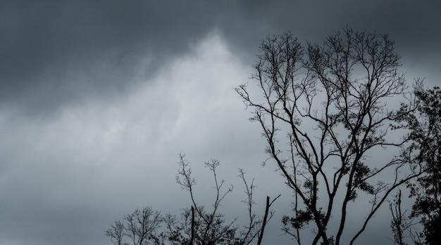 Sylwetka martwe drzewo na ciemnym dramatycznym niebie i czarne chmury