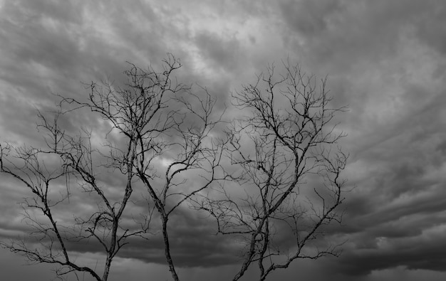 Sylwetka martwe drzewo na ciemnym dramatycznym niebie i tle białych chmur na spokojną śmierć. rozpacz i beznadziejna koncepcja. smutny z natury. śmierć i smutne tło emocji. unikalny wzór martwej gałęzi.