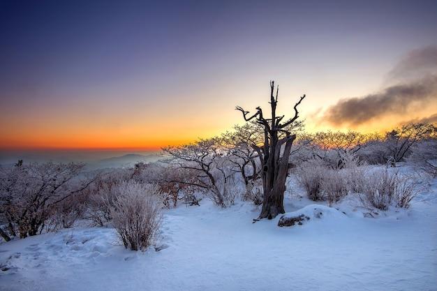 Sylwetka martwych drzew, piękny krajobraz o wschodzie słońca w parku narodowym deogyusan w zimie, korea południowa